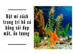 Bật mí cách trang trí hồ cá bằng sỏi đẹp mắt, ấn tượng